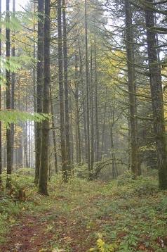 path thru the woods