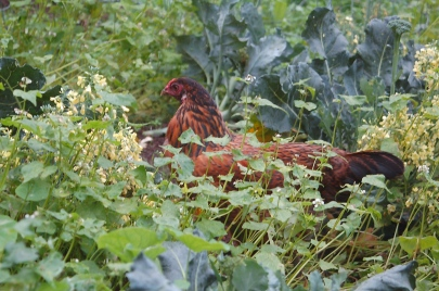 fall cover crops & clean up crew