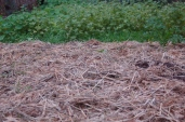 sheet mulch & cover crops