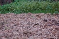 sheet mulch & cover crops