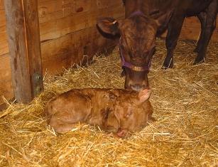 newborn- Eloise & Lucy
