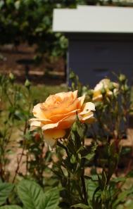garden beauty
