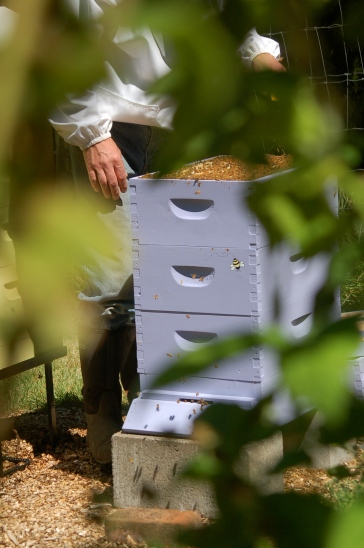 hives in the garden