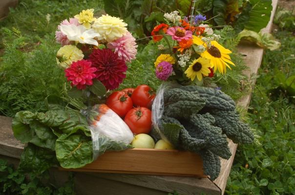 Summer FarmShare box