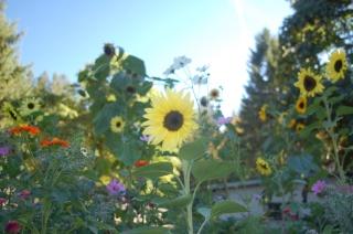 honey bee garden