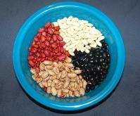 dry bean harvest