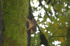 woodland friend