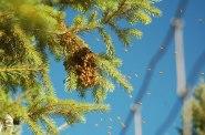 small swarm