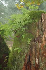 nursery stump