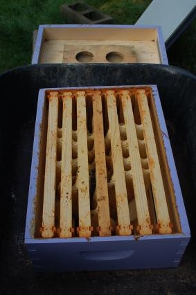 cross comb in honey super