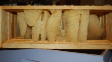 cross comb from a die out hive