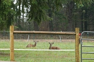 pasture visitors