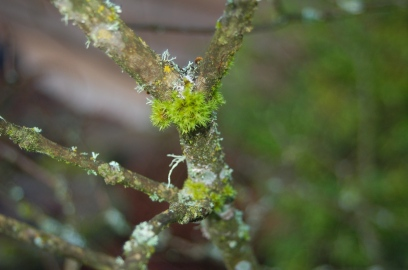 moss on lilac