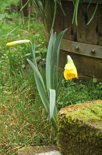 early bloomer