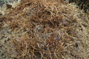 compost heating up