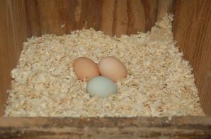 1st eggs
