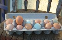 egg harvest