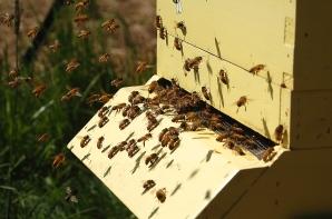 vibrant beehive