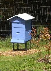 the new split- blueberry hive