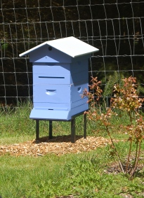 the new split- blueberry hive