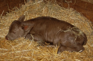 napping in a straw nest