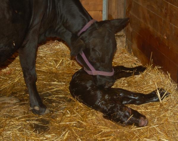 FullCircle Walter- newborn