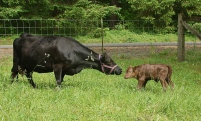 Mom & her new son Merrideth & Walter