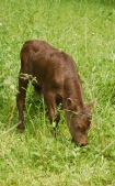 FullCircle Walter- 1 day old