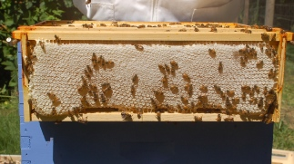 capped honey frame