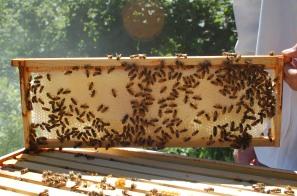 honey frame