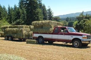 hauling hay