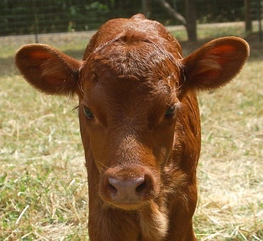 FullCircle George @ 1 week