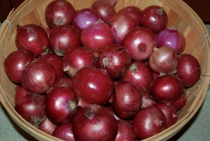 red onion harvest