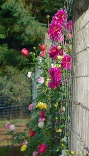 peeking thru the fence