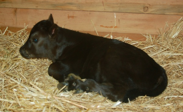 FullCircle Arthur @ 1 day old. Born 5/17/16